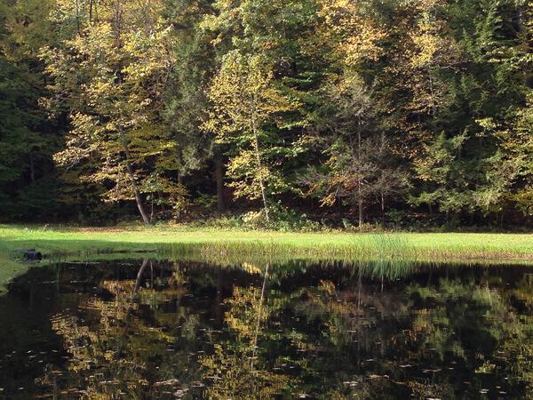 Der kleine Teich  Ich hab seine Location ein bisschen angepasst, damit er gleich hinter dem kleinen Cottage liegt. Aber so ungefähr sieht er aus. Ich liebe solche kleinen, geheimen Orte